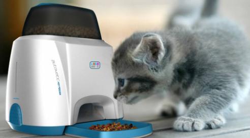 宠物喂食器m6米乐app官网下载报告